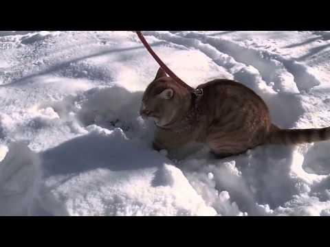 老虎仔用手仔玩雪 Little tiger plays snow