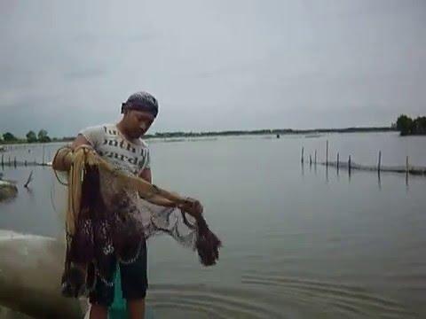 Cara Menjala Ikan Tambak