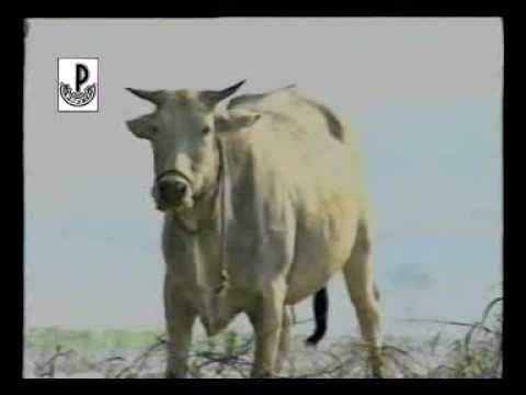Jangal Jangal Baat Chali Hai video