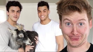 THE SEARCH FOR OUR NEW PET! - Dolan Twins Reaction