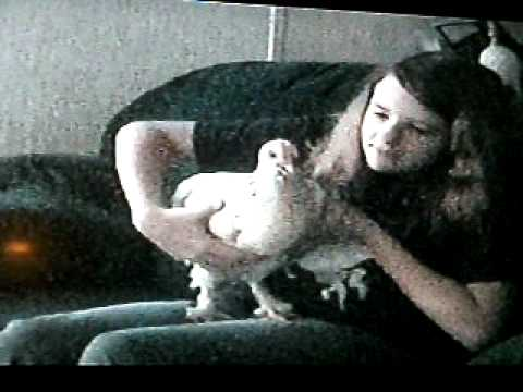 The Singing Chicken video