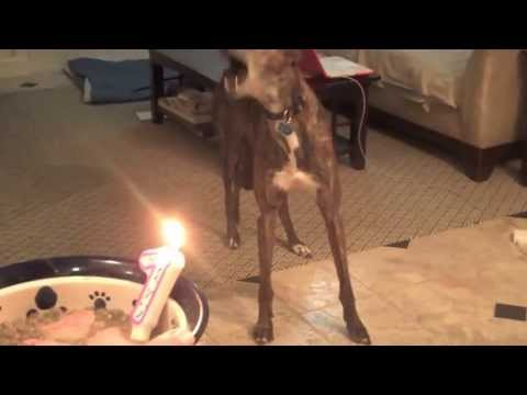 Cats Dogs Pets n Animals CAN SING SONG Happy Birthday After Cruelty Torture