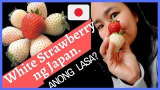 WHITE STRAWBERRY OF JAPAN|JAPANESE STRAWBERRY REVIEW| WHITE STRAWBERRY| EXPENSIVE JAPANESE FRUIT