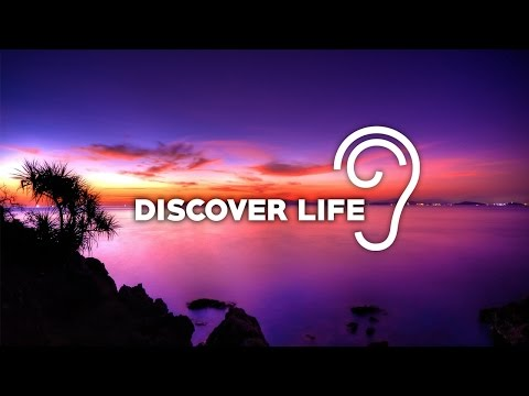 Uppermost - Discover Life