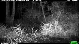 A look at what moved in front of our trail camera: see for yourself