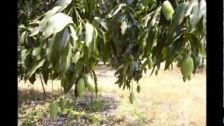 Sistema De Riego SIAM Agrícolas