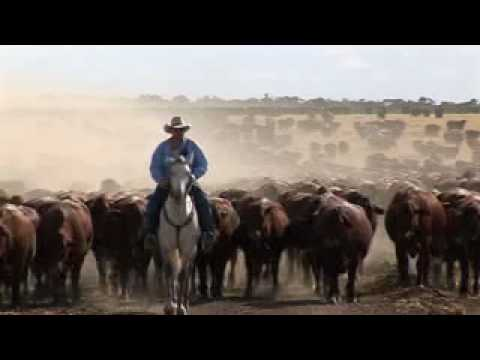 Acton Super Beef - Australia's great beef
