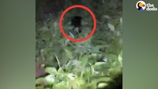 Woman Live Streams Search For Stray Dog In The Middle Of The Night | The Dodo