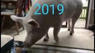 СМЕШНЫЕ ЖИВОТНЫЕ видео подборка 3 FUNNY ANIMALS VIDEO