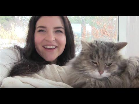 Learning Czech with Babi (KittyIRL) | Kitty Plays
