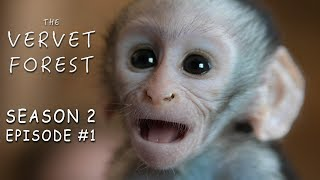 Two Orphan Baby Monkeys Arrive At Our Animal Sanctuary - Vervet Forest - Season 2 - Episode 1