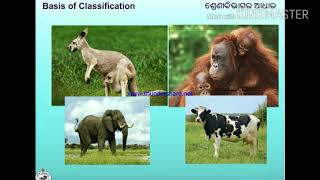 Basic Classification And Scientific Naming..// 9th Class Life Science Video In Odia Language..
