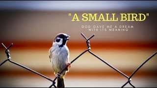A small bird - God gave me a dream with its meaning - Evans Francis