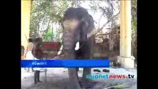 Scandan ready for festival   :Alappuzha  News: Chuttuvattom18th Feb 2014 ചുറ്റുവട്ടം