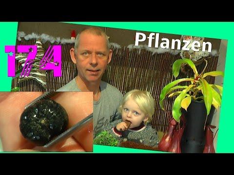 Banane Palme Paprika und andere Pflanzen aussäen