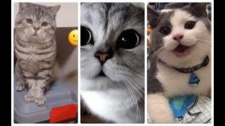 The cutest, cute cats and dogs part 5