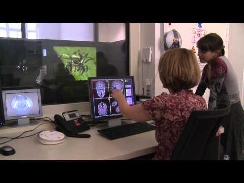 Uni Graz: Gehirn und Verhalten