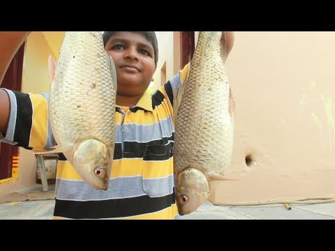 Amazing Fish Cooking Fish Curry | Delicious Fish Recipe | indian village food