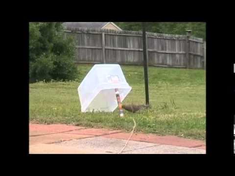 Как сделать ловушки для голубей
