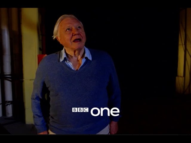 Attenborough and the Giant Dinosaur: Trailer - BBC One