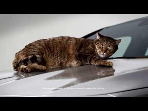 Mercedes Benz CLA реклама с котом