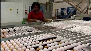 Hyde County Egg Farm Rose Acre Update
