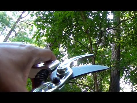 Product Review   Heavy Duty Pruning Shears