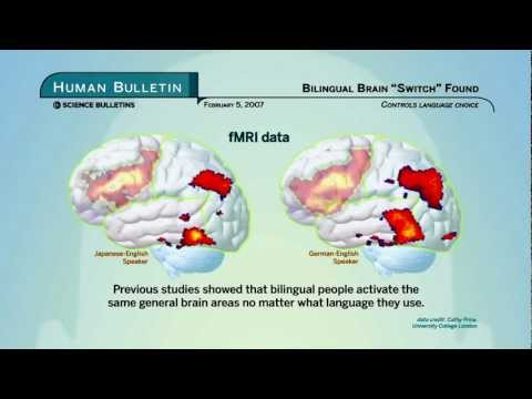Science Bulletins: Bilingual Brain 'Switch' Found