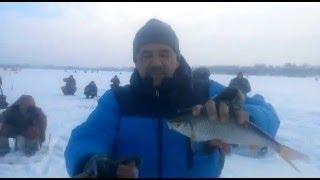 цимлянское водохранилище серпухов рыбалка