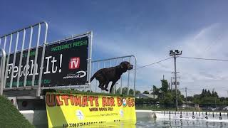 Pups take a plunge at the UKC Premier Dog Show