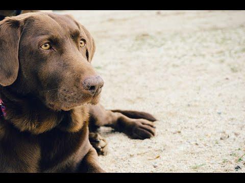 Les vaccins du chien