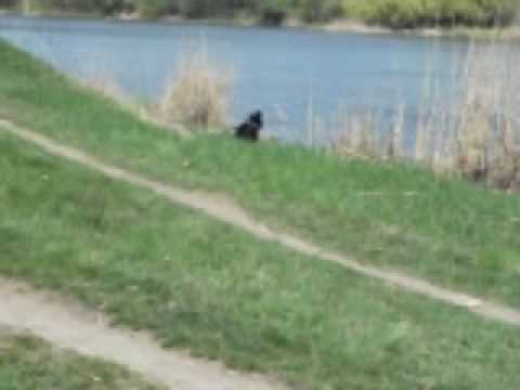 puppy-in-park-playing-with-girl.html
