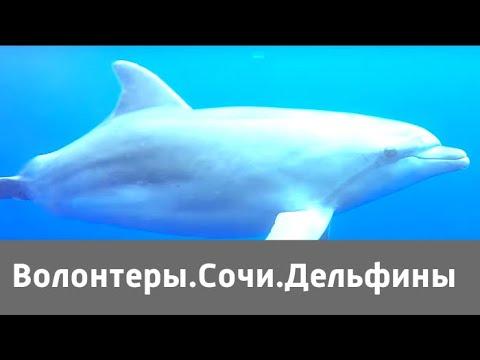 Волонтеры. Сочи. Дельфины  | Живая Планета