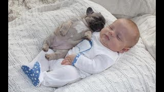 Adorable Pug Puppies Love Babies Compilation  - A Cute Puppy and Baby Videos 2017