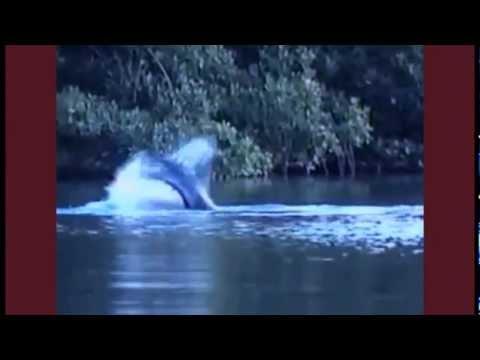 extraña criatura en un rio. Sirenas