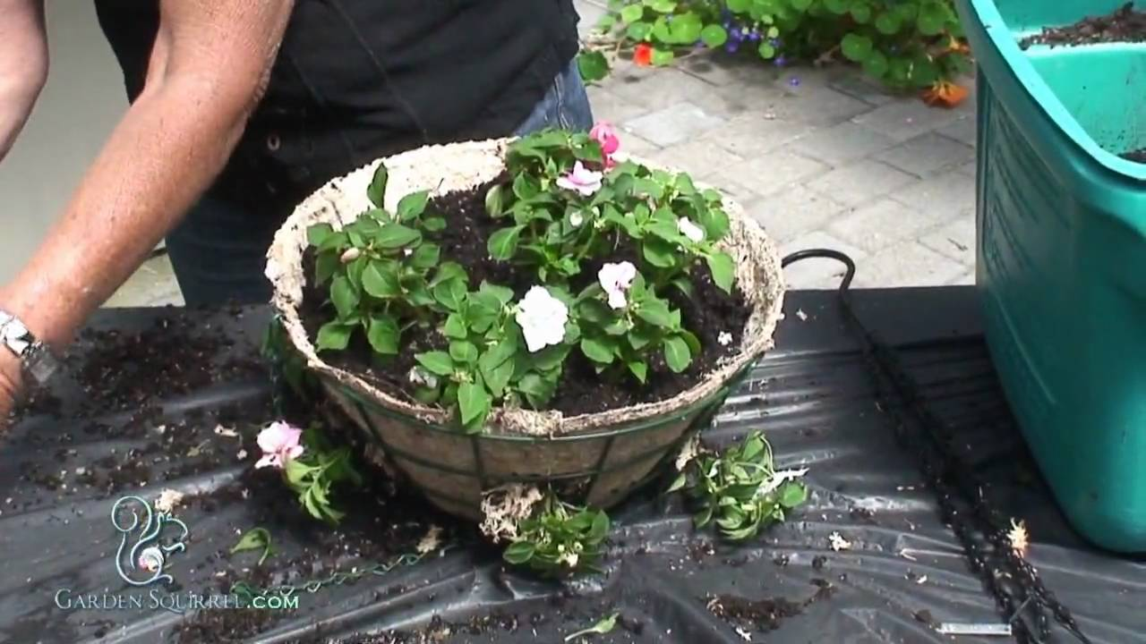 How to Make a Hanging Basket of Impatients (Advanced ...