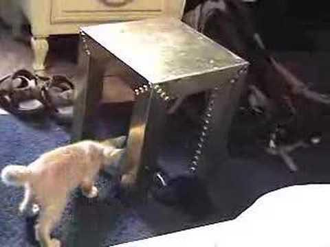 Kitty Porn video