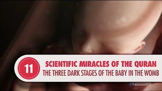 Video: In Quran 39:6, three dark stages of baby development in mothers womb - Quran Miracle