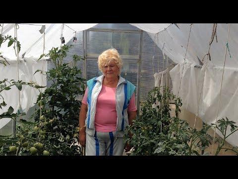217. Важные советы для урожайных томатов