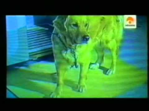 El sexto sentido de los perros  Terremotos