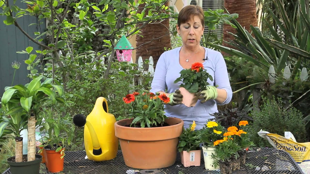 How To Plant Beautiful Containers With Annual Flowers