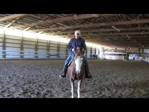 For the Love of Horses: A profile of local horse trainers