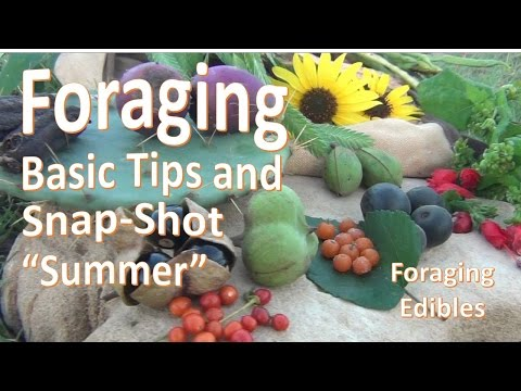 Southern Foraging Snap-Shot -Summer-  Basic Tips and Technique #1