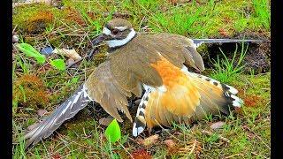 Âm mưu của con chim sát thủ gãy cánh P2