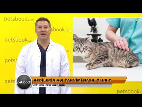 Kedilerin aşı takvimi nasıl olur?