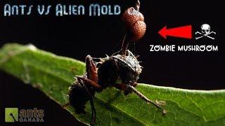 Ants vs. Alien Mold