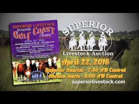 Superior Livestock's - Gulf Coast Classic