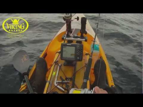 Kayak Fishing Big Snapper Whangarei NZ with Viking Kayaks