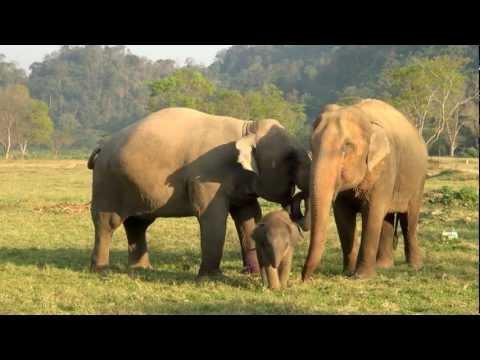 Baby Elephant Bath Time Part3