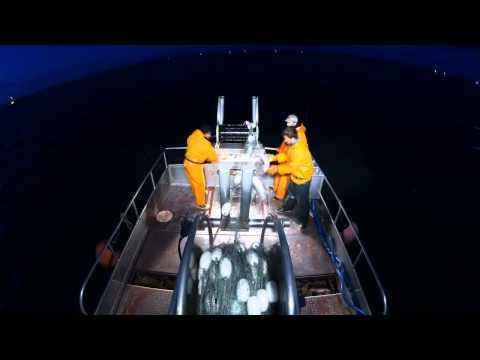 Bristol Bay Commercial Fishing 2014